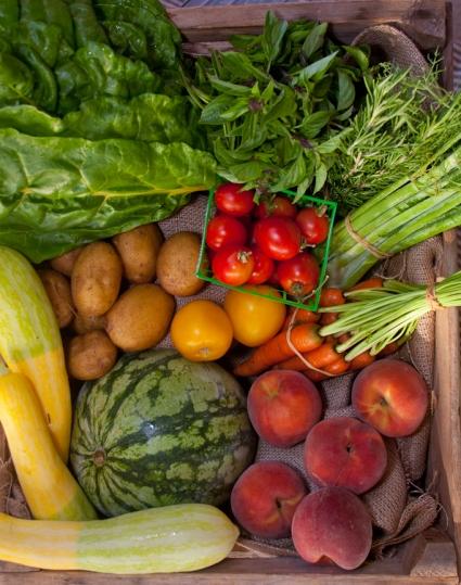 20100721_ntc_farm_story_0055