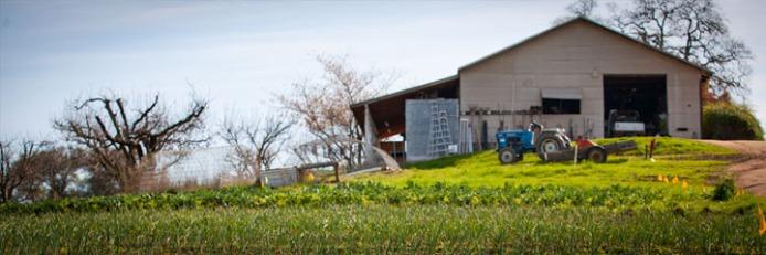 20100721_ntc_farm_story_0748-b